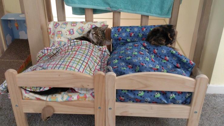 IKEA podarowała schronisku dla kotów łóżeczka dla lalek