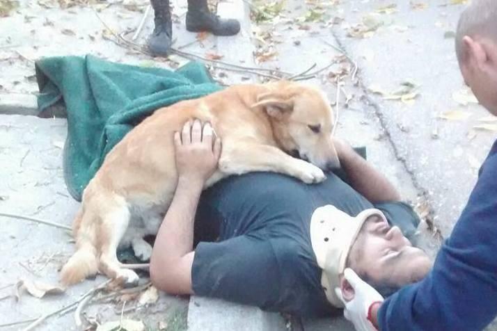 Pies nie chciał opuścić swojego właściciela po wypadku