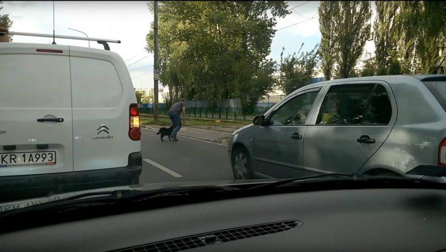 Kierowca z Krakowa zablokował ruch żeby uratować psa