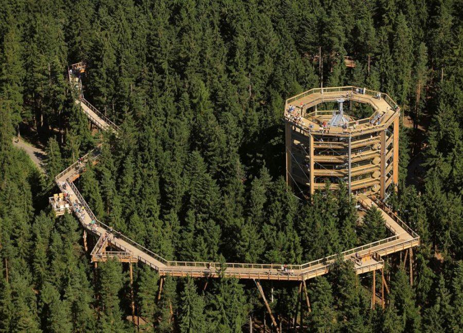 W Czechach otwarto unikatową ścieżkę turystyczną wśród koron drzew