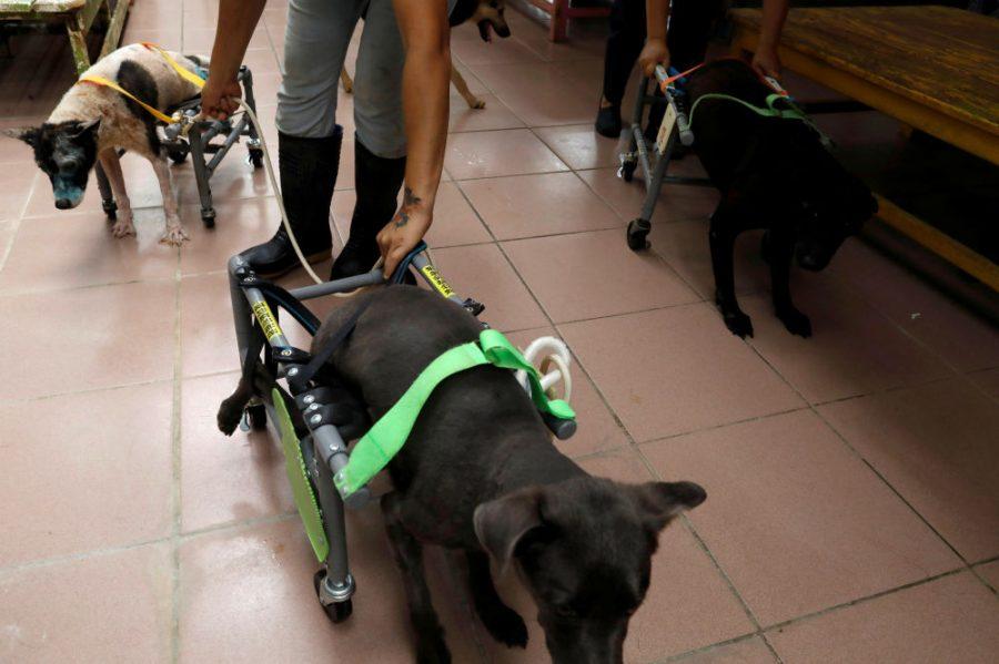 Pomysłowy konstruktor o wielkim sercu, buduje wózki inwalidzkie dla psów ze schronisk