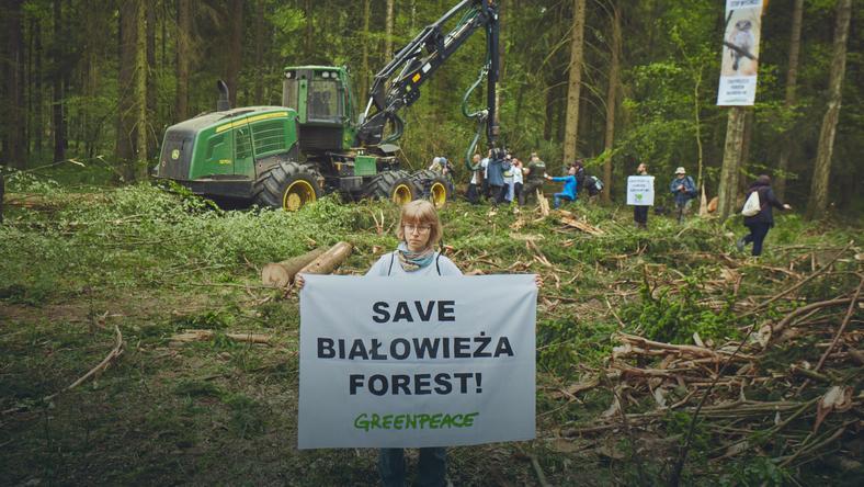 Powstał Obóz dla Puszczy Białowieskiej. Każdy komu nieobojętny jest los najstarszego lasu Europy może się przyłączyć