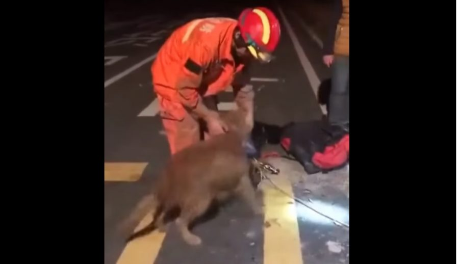 Pies dziękuje ratownikowi, który ocalił mu życie