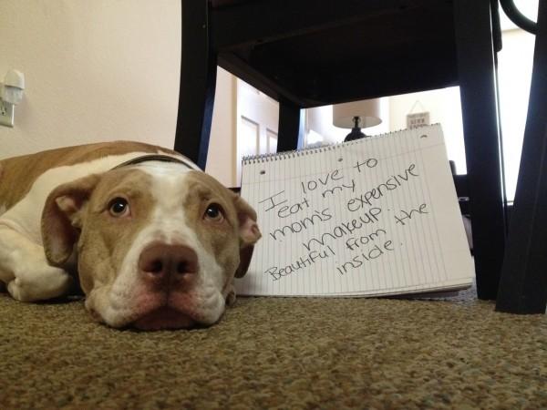 Czy zwierzęta rozumieją nasze słowa? Nie. Świat widzą dużo szerzej