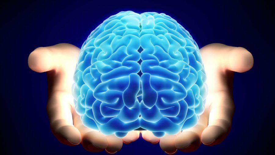 Luteina przeciwdziała starzeniu się mózgu