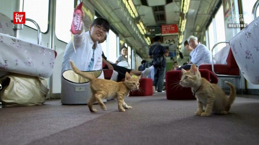 Przez Japonię przejechał pociąg z kocią kawiarnią