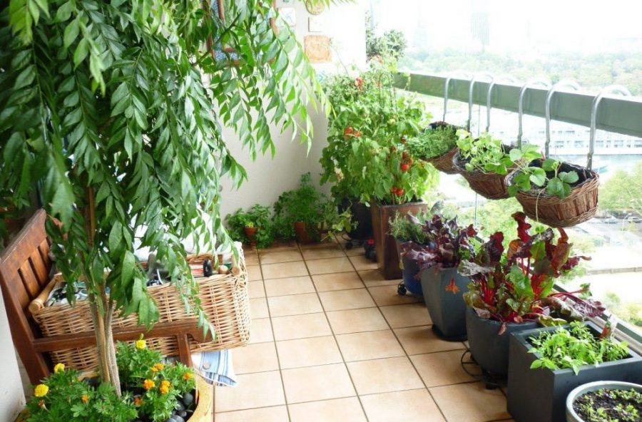 Wprowadzają ulgę podatkową na zieleń na balkonach i w ogródkach