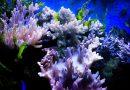 Wielka Rafa Koralowa może się odrodzić