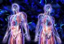 Odkryto nowy, nieznany dotychczas organ człowieka – Interstitium