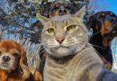 4 października obchodzimy Światowy Dzień Zwierząt