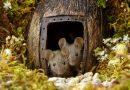 Fotograf odkrył rodzinę myszy żyjącą w jego ogrodzie, zamiast pułapek, postawił im miniaturową wioskę
