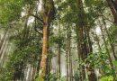 Na południu Polski zgłoszono wnioski dotyczące pół tysiąca nowych pomników przyrody