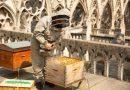 To niezwykłe… pasieka z Notre Dame przetrwała pożar