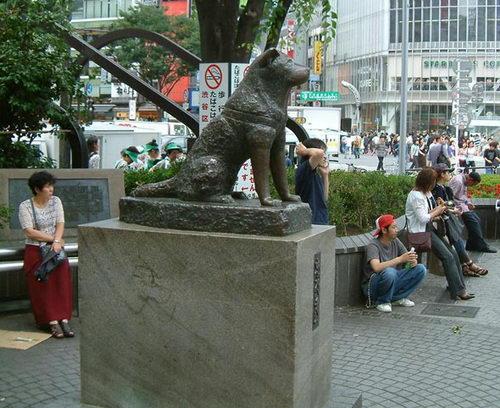 Hachiko – najwierniejszy pies świata