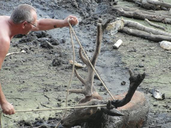 Jeleń ugrzązł w mule z wysychającego jeziora, uratował go wędkarz