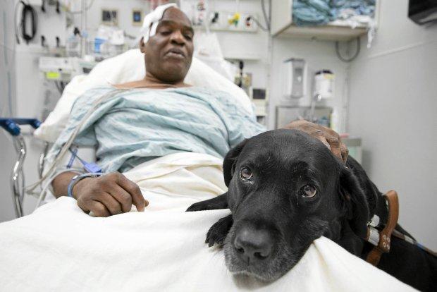 Jak pies Orlando uratował niewidomego opiekuna
