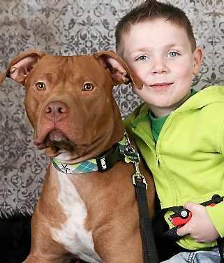 Uratowany pitbull o imieniu TatorTot, po czterech dniach od adopcji ratuje chłopca