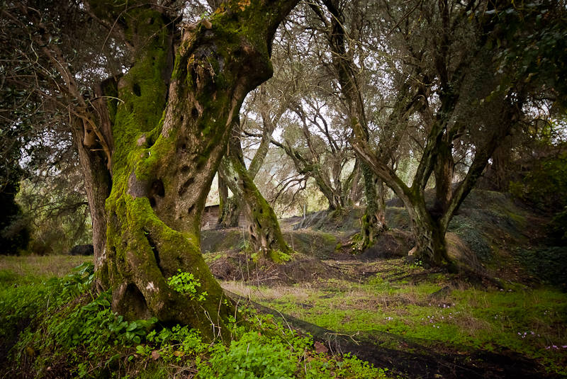 Magiczne właściwości drzew