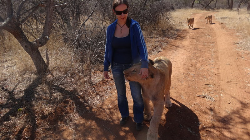 Życie wśród lwów