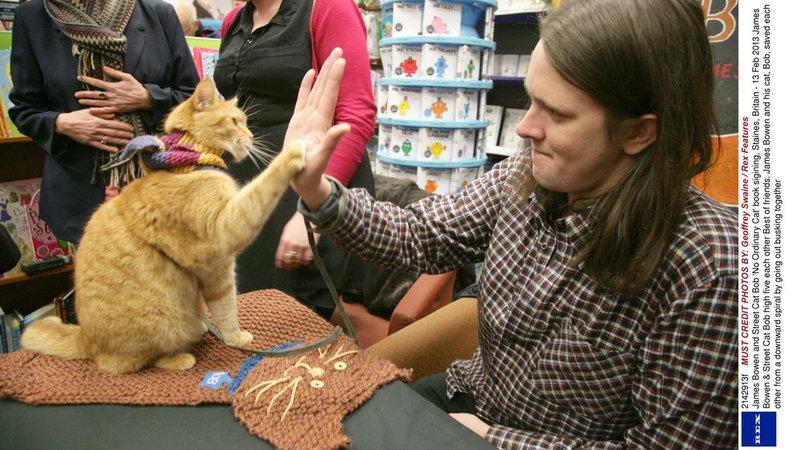Kot, który uratował człowieka