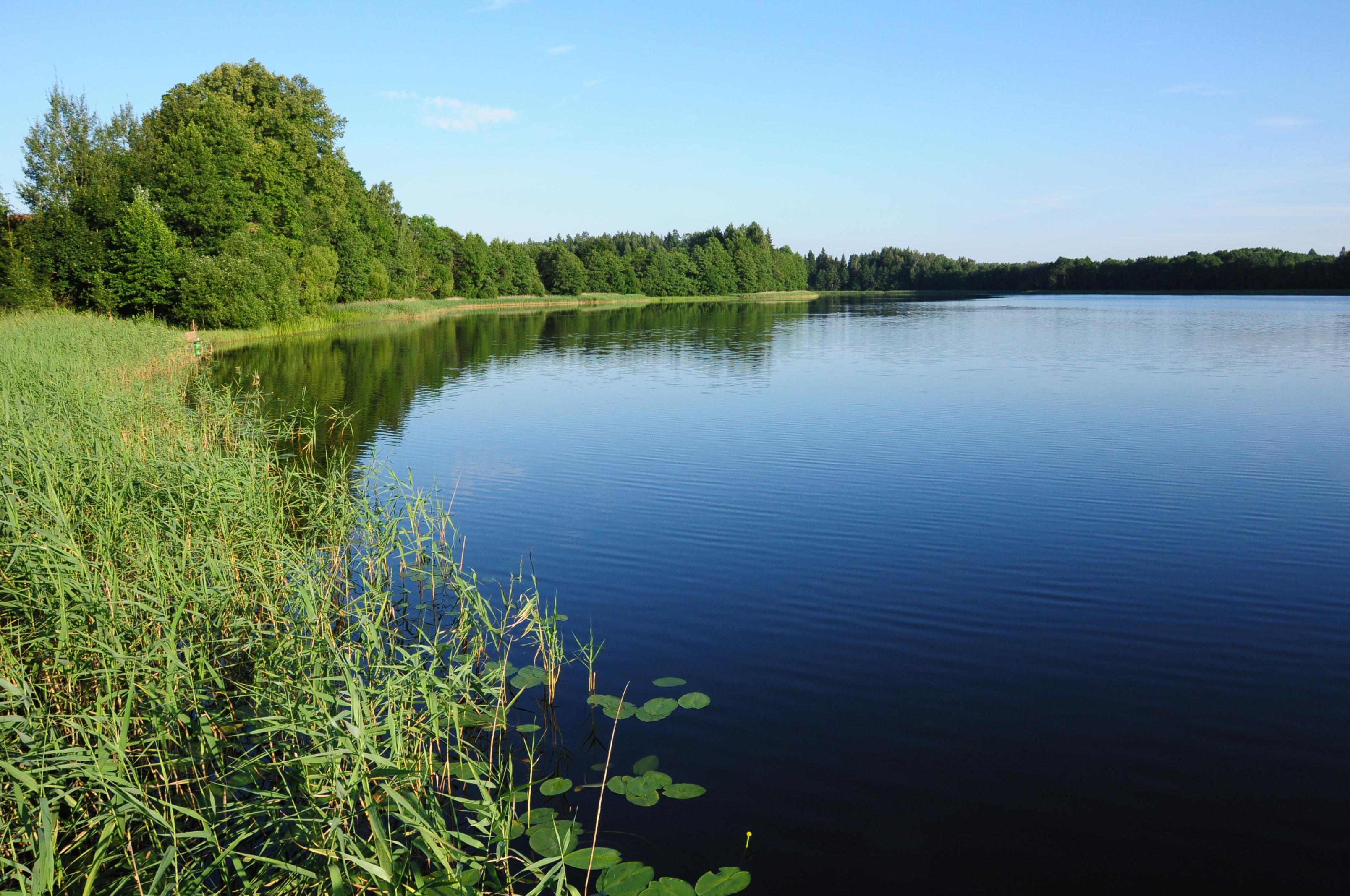 Skuteczny filtr do wody z gałązki drzewa