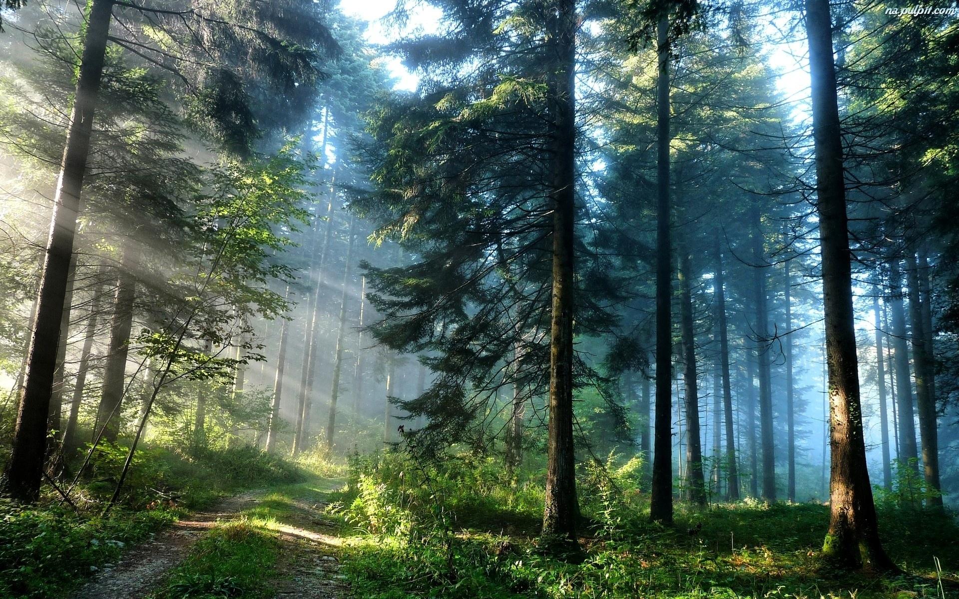 W Polsce coraz więcej lasów