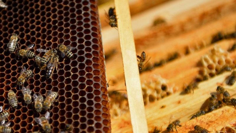 Sto hoteli dla pszczół powstanie w 17 polskich miastach