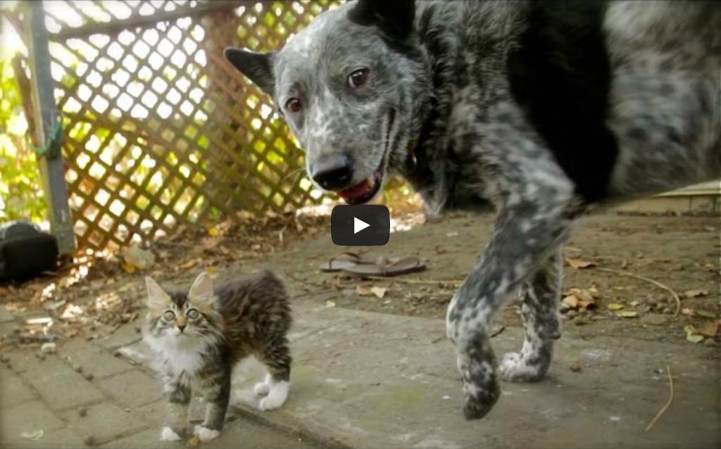 Takiej przyjaźni między psem i kotem jeszcze nie widzieliście!