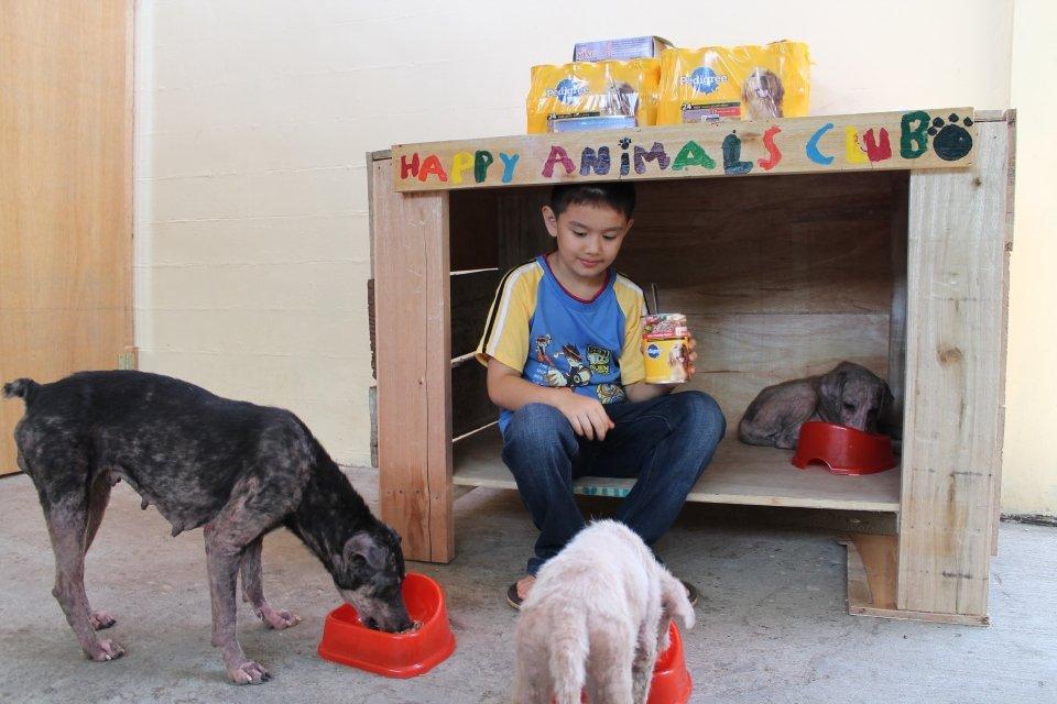 9-latek zaopiekował się bezpańskimi psami i założył własne schronisko