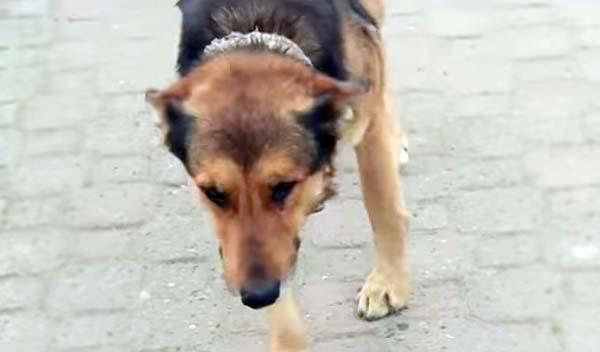 W Turcji już wiedzą, jak uporać się z problemem głodnych, bezdomnych psów