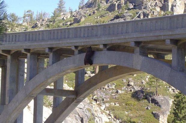 Na ratunek niedźwiedziowi