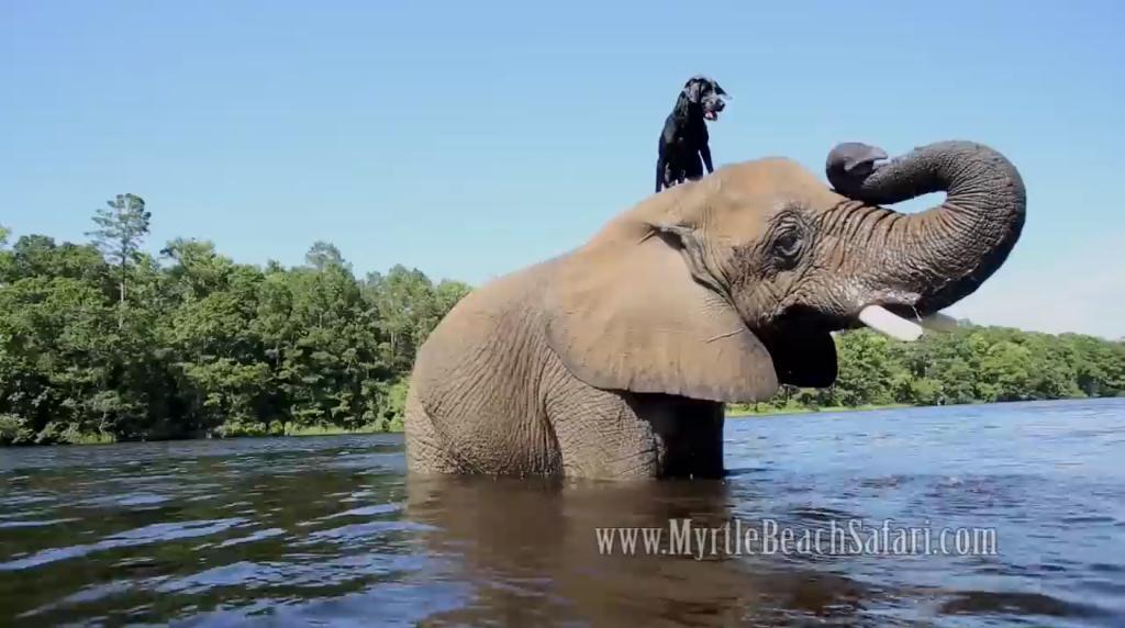 Osierocony słoń i odrzucony pies są największymi przyjaciółmi