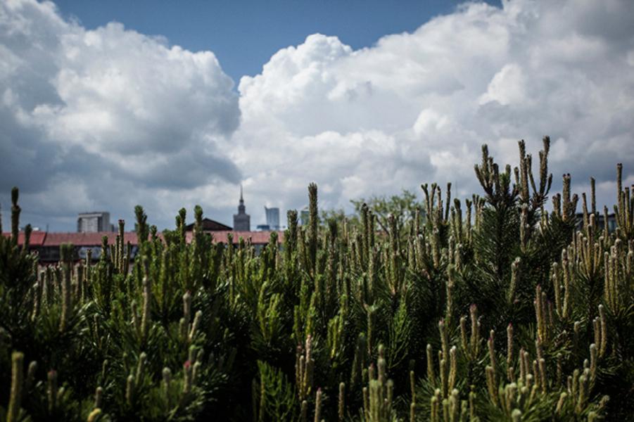 """Niezwykły ogród na dachu """"Kopernika"""""""