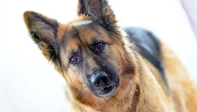 11 powodów, dla których warto przygarnąć psa ze schroniska