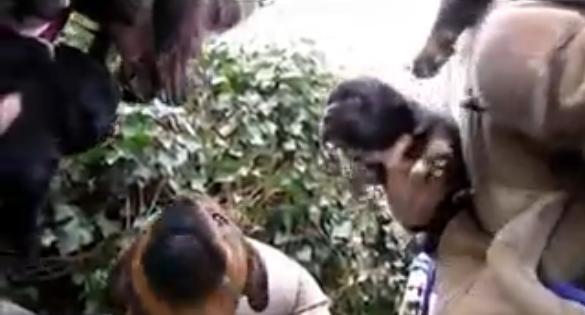 Bezdomny pies zrobił coś nieprawdopodobnego, aby uratować swoje szczeniaki.
