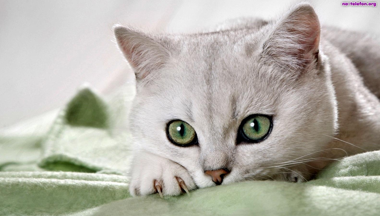 Praca marzeń: Poszukują ludzi do głaskania kotów