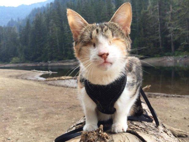 Ta kotka urodziła się niewidoma i była bezdomna. Nowi właściciele podarowali jej wspaniałe życie