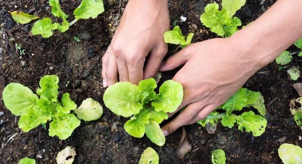 Bakterie szczęścia mieszkają w naszych ogrodach