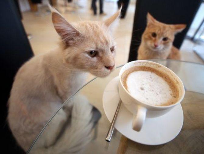 W tej kawiarni nie tylko napijesz się kawy, ale także pogłaszczesz kota