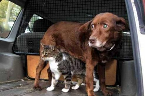 Historia kota, który został przewodnikiem psa