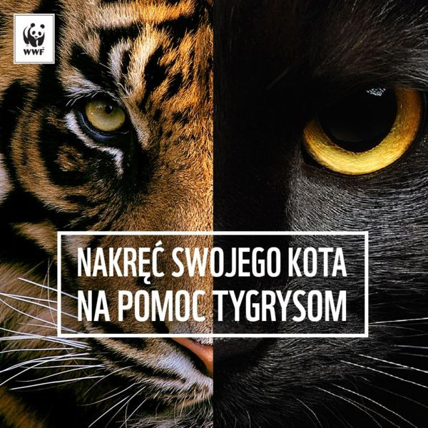 WWF Polska zachęca: Nakręć kota na pomoc tygrysom!