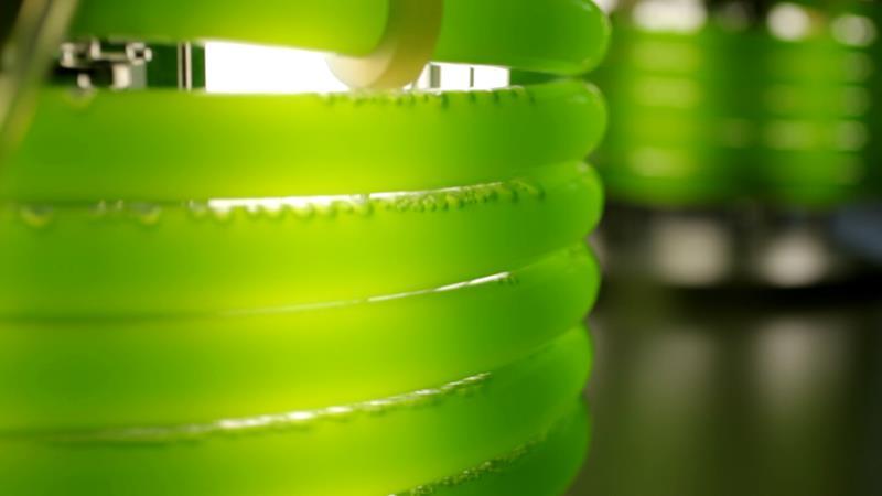 W Polsce powstało centrum, które zajmie się produkcją energii z alg