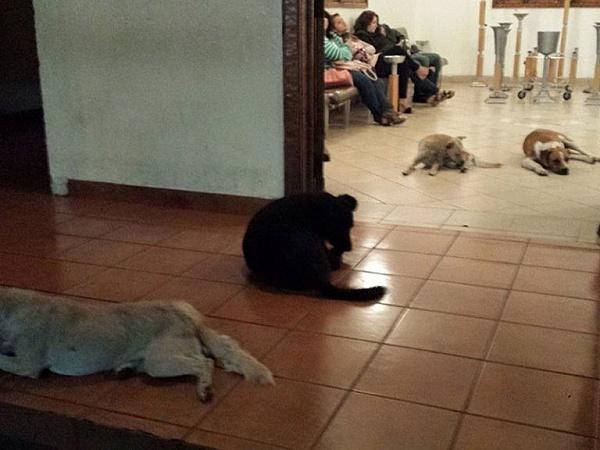Całe życie zajmowała się bezpańskimi psami. Nikt nie spodziewał się tego, co wydarzyło się na jej pogrzebie