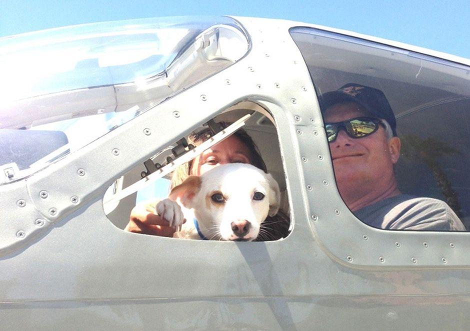 Lotniczy ratunek dla bezpańskich psów