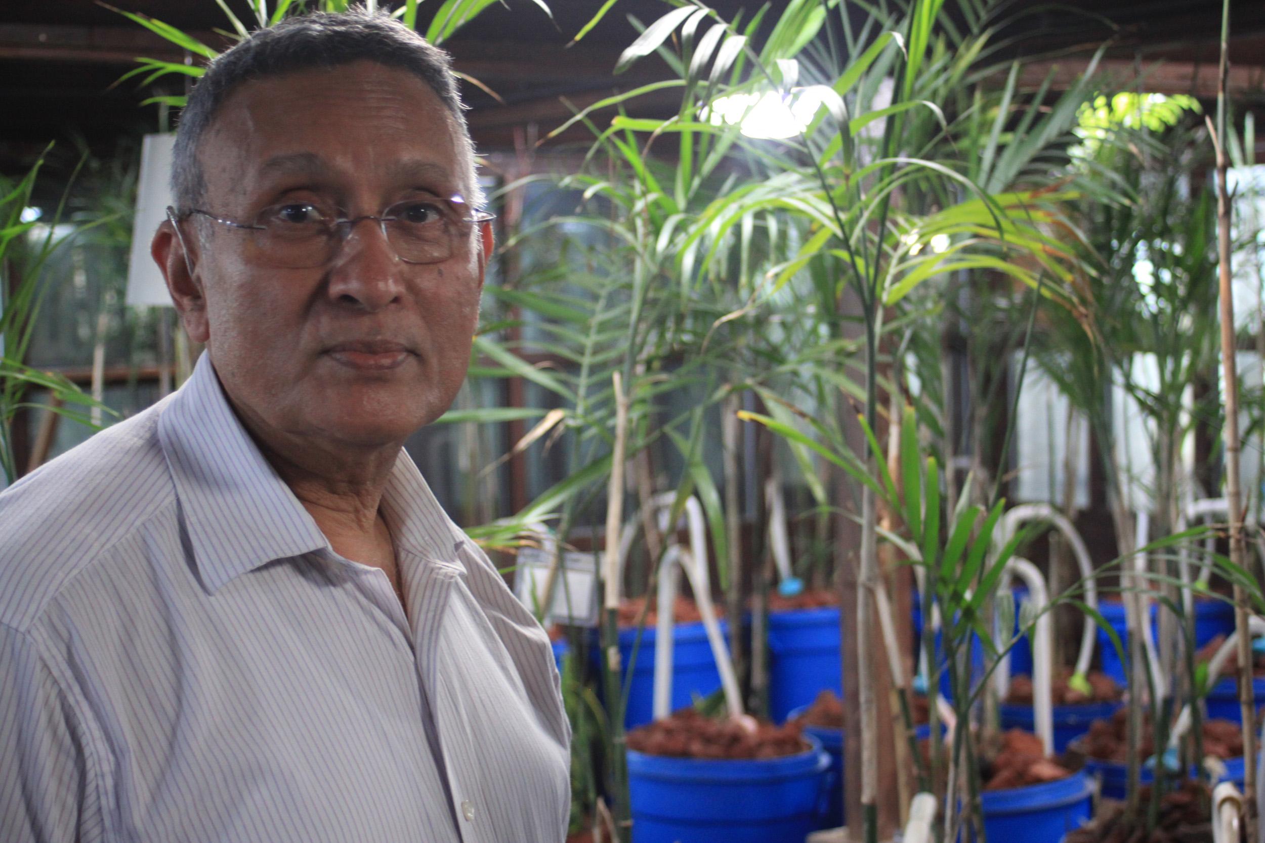 Kamal Meattle przedstawia 3 pospolite rośliny, które postawione w domu lub biurze, mogą w mierzalny sposób poprawić jakość powietrza