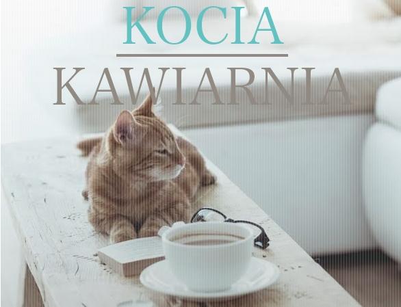 Pierwsza w Polsce kocia kawiarnia – zrelaksuj się przy mruczeniu