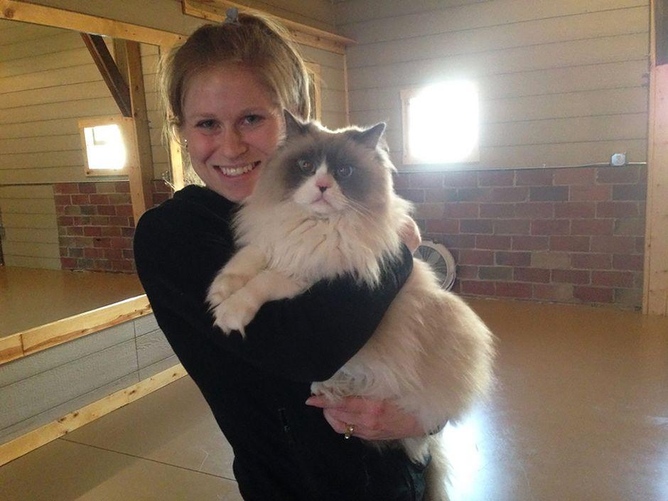 Joga i koty okazały się idealnym połączeniem do znalezienia domu bezdomnym czworonogom